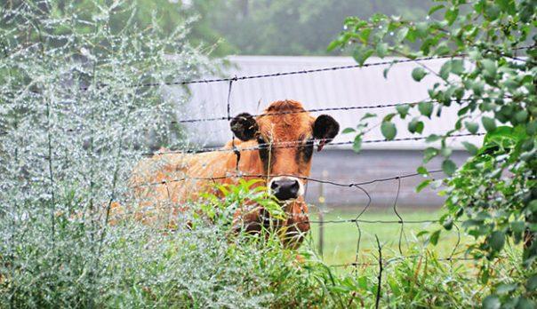 farm-fence_iStock-Thinkstock